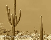 saguaro snows 3- original 8x8 photograph