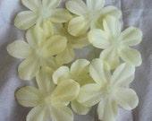 100 Ivory Artificial silk pansy flower petals