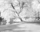 Boston Public Garden  PHOTOGRAPHY Print