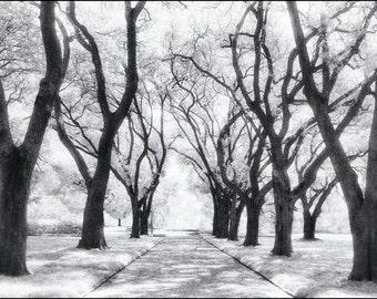 Longue Vue PHOTOGRAPH ART Print