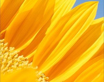 Bright Days Ahead Photograph - Sunflower 2