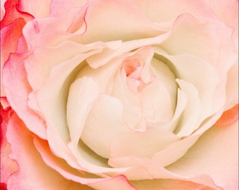Pink Tea Rose Flower Print