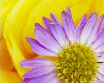 Archival Flower Print - 0185