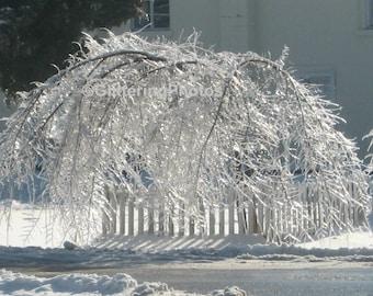 Winter, White, Tree, Frozen, Snow, Ice, Fine Art, Photography, Print, 8 x 10, Glossy
