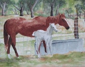 Mare and Foal in a Hill Country Pasture Greeting Cards by Nan Henke 4 1/4 x 5 1/2 inch (a set of 4) Blank