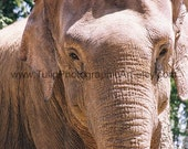 ACEO - Art Card - Tiny Print - Elephant - 2 3\/4 inch by 3 3\/4 inch Photographic Print