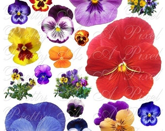 Pansy Pansy Pansies - Digital Collage Sheet - INSTANT DOWNLOAD