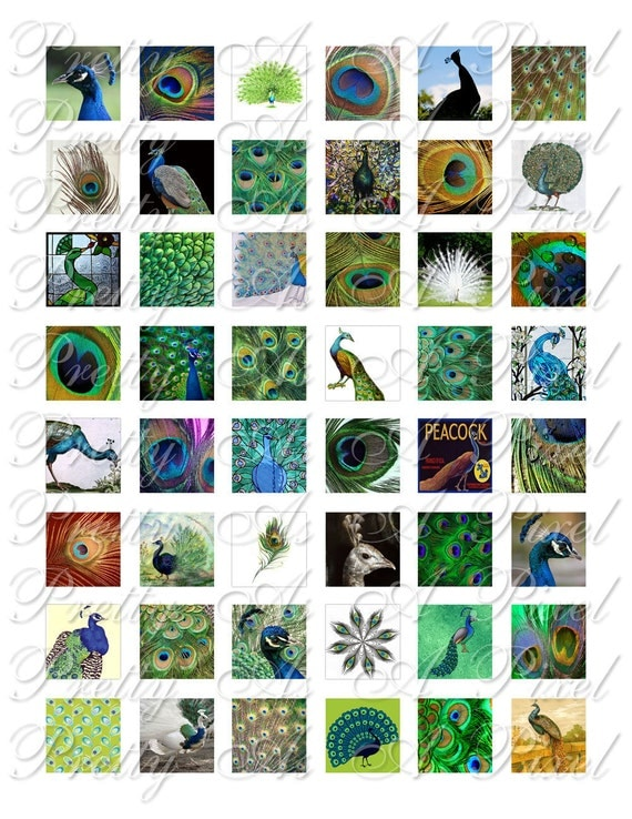 Peacock Fancy - 3 sizes - Inchies, 7-8 inch, AND scrabble tile size .75 x .83 inch - Digital Collage Sheet - INSTANT DOWNLOAD