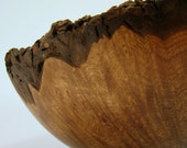 The Absolute Sovereign - Claro Walnut Burl Bowl