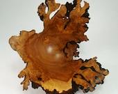 Nebular Fragility - Juniper Burl Bowl