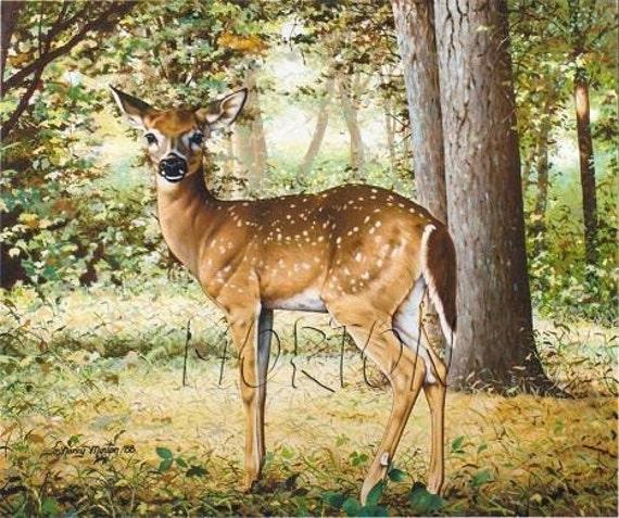 oil painting, whitetail fawn, 16x20 giclee print, by Nancy Morton