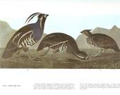 John James Audubon Bird Print - Two Quail - Vintage Natural Science Home Decor Art Illustration Great for Framing