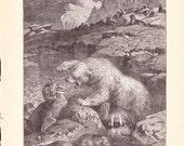 1880 Animal Print - Polar Bear and Walrus