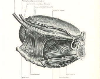 1926 Human Anatomy Print - Tongue Muscle - Vintage Antique Medical Anatomy Art Illustration for Doctor Hospital Office
