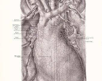 1926 Human Anatomy Print - Pericardium - Vintage Antique Medical Anatomy Art Illustration for Doctor Hospital Office