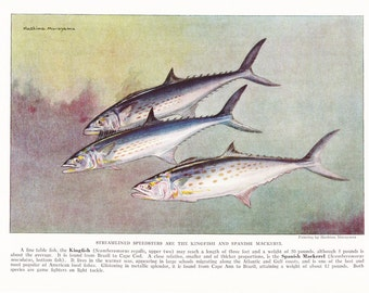 1939 Fish Print - Kingfish Spanish Mackerel - Vintage Antique Nature Science Animal Art Illustration Cabin Cottage Home Decor for Framing