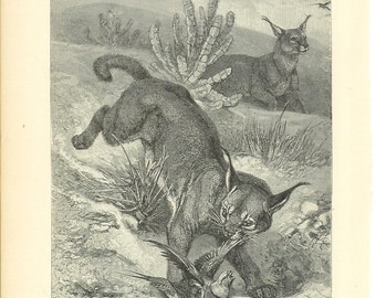 1890s Animal Print - Caracals Hunting - Vintage Antique Home Decor Art Illustration for Framing 100 Years Old