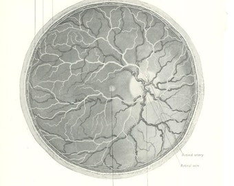 1926 Human Anatomy Print - Eye Retina - Vintage Antique Medical Anatomy Art Illustration for Doctor Hospital Office