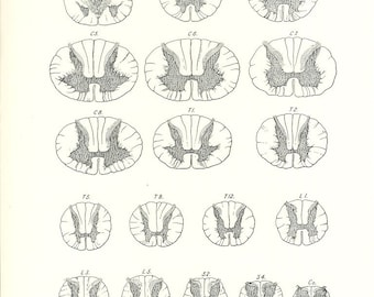 1926 Human Anatomy Print - Sections Spinal Cord - Vintage Antique Medical Anatomy Art Illustration for Doctor Hospital Office