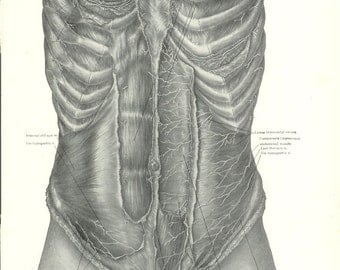 1926 Human Anatomy Print - Abdominal Nerves - Vintage Antique Medical Anatomy Art Illustration for Doctor Hospital Office