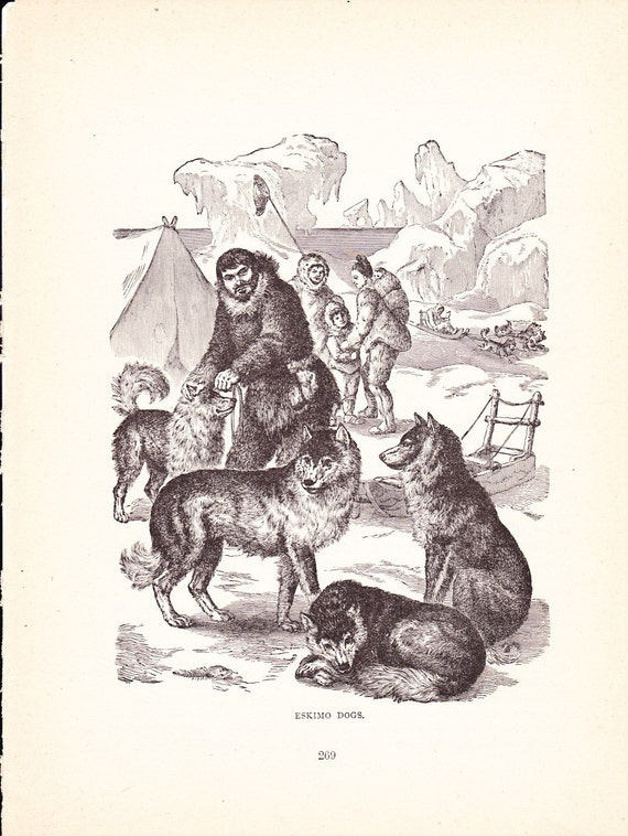 1880 Animal Print Eskimo Dogs Vintage Antique Home Decor