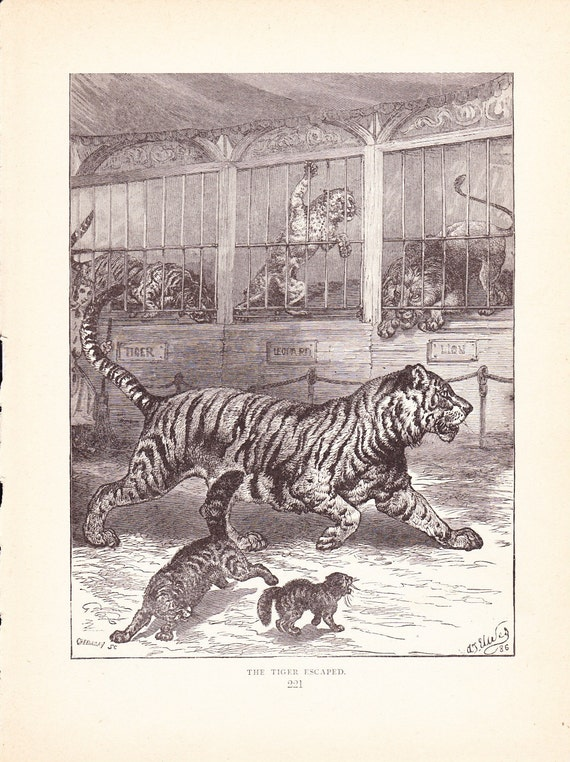 1880 Animal Print Tiger Vintage Antique Home Decor Art