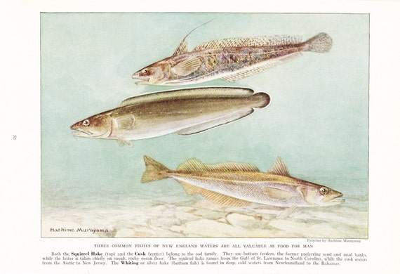 1939 Fish Print - New England Fish - Vintage Antique Nature Science Animal Art Illustration Cabin Cottage Home Decor for Framing