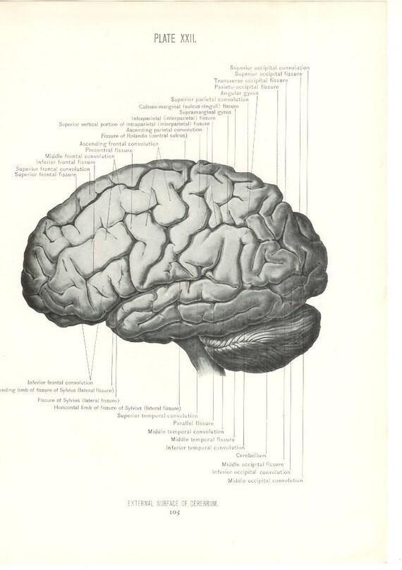 Vintage Brain Illustra...