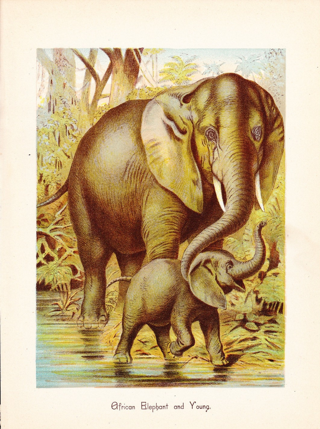 1880 animal print african elephant and young vintage by African elephant home decor