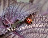 5x7 - Ladybug