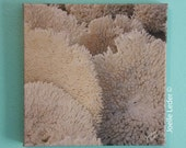 3 CUSTOM ORDER / White Coral Image from our Seascapes Collection - Canvas Gallery Wrap