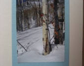 Utah Birch Photo ACEO Note Card