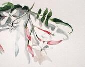 Winter Jasmin, original one of a kind watercolor