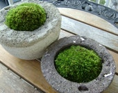 Moss Bowl with Reindeer Moss