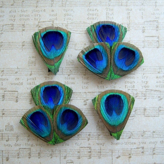 Petit Peacock Clips - Set of 4