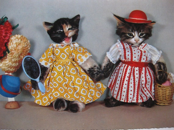We are dressed to impress - strange vintage cat postcard