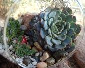 Succulent Terrarium Garden Hanging Glass Globe DIY Kit with GIFT BOX
