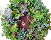 "SHIPS MAY 28, Succulent Wreath or Centerpiece 14"", Featured in Birds & Blooms and Phoenix Magazines, The Original Succulent Designs"