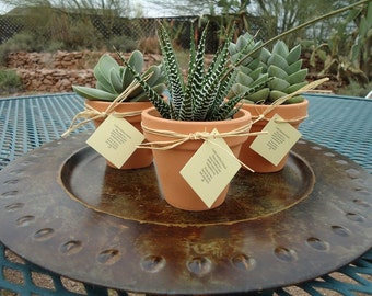 3 Succulent Favors, Assorted Plants in Terracotta Pots with Hang Tags