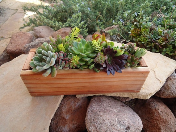 Organic Succulent Plant Centerpiece Decor for Your Windowsill, Wedding Tables, Baby or Bridal Shower