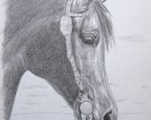 horse art - Portrait of an Arabian Horse - original graphite pencil drawing - 9 by 12 inches