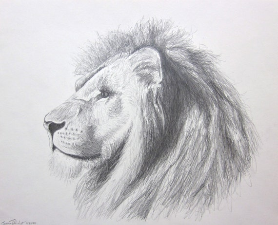 lion art - Panthera Leo In Pencil - original pencil drawing - 11 by 14 inches