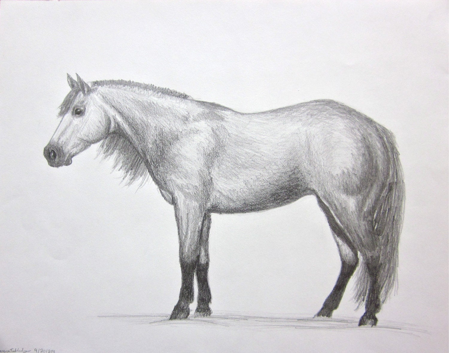 Quarter horse drawing - photo#13