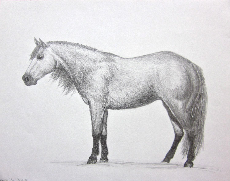 horse art Quarter Hors...