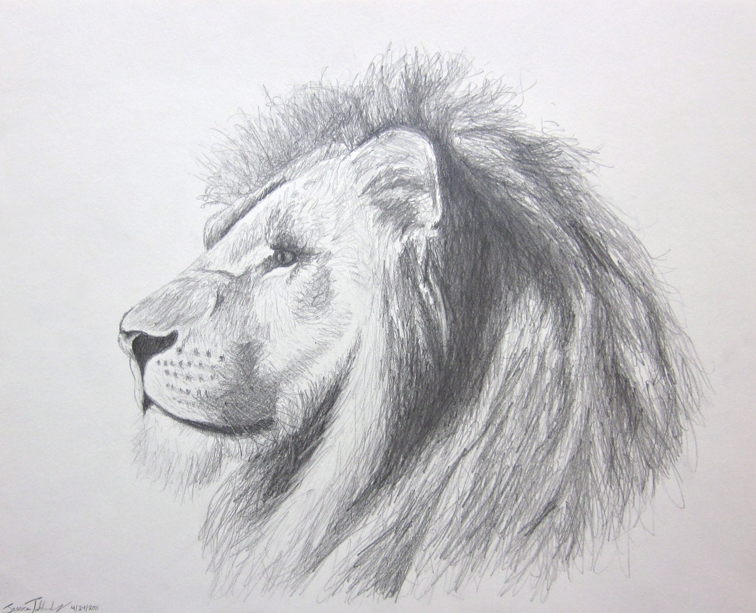 lion pencil drawings  ...