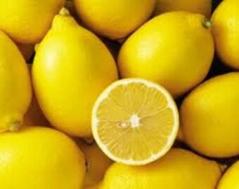6 pack Lemon Soy Votives