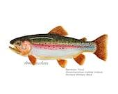 Fish print watercolor Rainbow Trout  Print 5x7 painting prints handmade