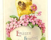 vintage Easter Greeting postcard Chick on Egg Flowers Germany Antique