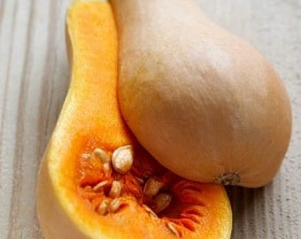 Organic Winter Waltham Butternut Squash Heirloom Vegetable Seeds