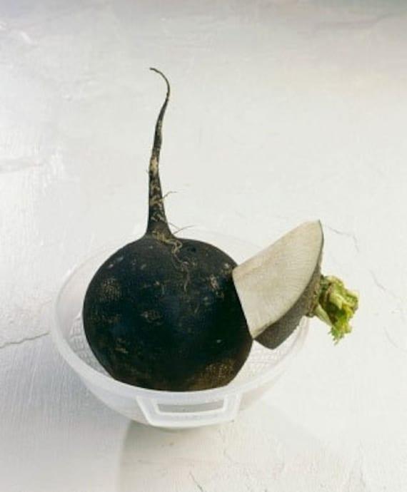 Organic Black Spanish Radish Heirloom Vegetable Seeds